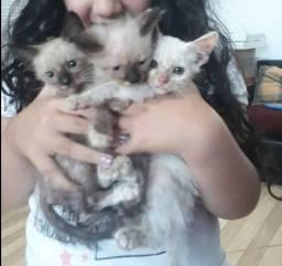 Filhotes de gatos para doação