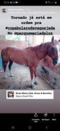 Vendo cavalo QM de esteira