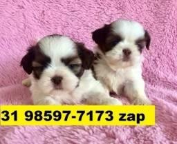 Canil Filhotes Cães Top BH Shihtzu Basset Pug Yorkshire Bulldog Beagle Maltês