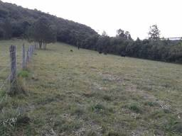 1546 - Sítio 4,5 Hectares - Morro do Tigre - Glorinha - RS