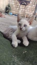 Título do anúncio: Gatos para adoção