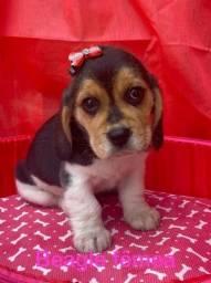 beagle- filhotes muito lindos com garantia!!!