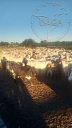 Fazenda a venda no Mato Grosso do Sul- Miranda c/ 2150Ha