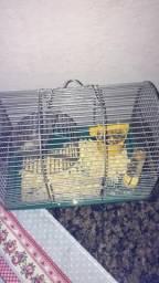 Hamister + gaiola com todos acessórios