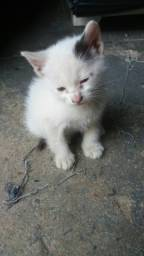 Filhotes gatinhos doação.