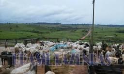 Fazenda no Pará. Marabá. 5080 ha