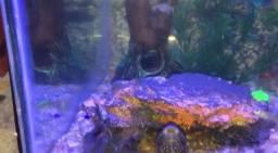 Troco aquário 200 littos  completo por som automotivo