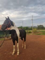 Cavalo ½ M.M