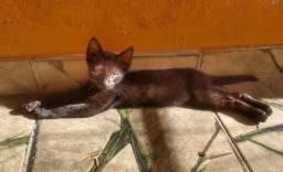 Doação gatinho preto