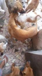 Título do anúncio: Doação Cachorros (Entrego em Domicílio!!!) Urgente!!!
