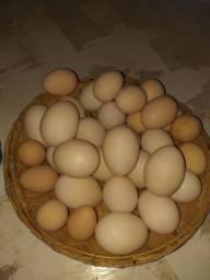 Título do anúncio: Vendo ovos de pata e galinha da angola
