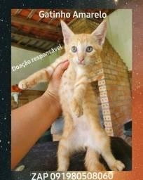 Lindo gatinho amarelo