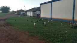 Fazenda com 324ha pra boi, em Lagamar!!