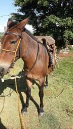 Vendo ou troco por cavalo ou égua