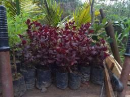Mudas lindas de plantas