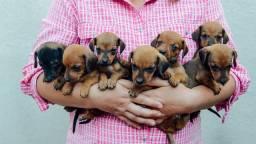 Doaçao urgente  de cachorros porte médio