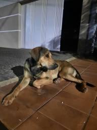 Título do anúncio: Cachorro para adoção