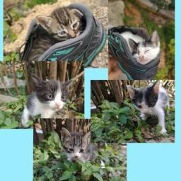 Título do anúncio: Doações de gatos