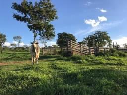 Crédito Agrícola/fazenda/gado