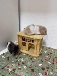 Promoção Hamster Anão Russo e Sírio