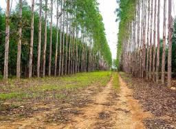 Fazenda de 65 ha - 6 Km de Água Fria