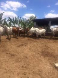 Ótima Fazenda 12,8 Hec, Criação de Gados, Estrada de Aldeia PE-027, Paudalho Aceito Carro