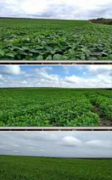 8271 | Fazenda à venda com 1 quartos em ZONA RURAL, BALSAS