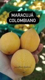 Maracujá GRANADILLA (colombiano)