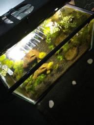 Lindo Aquário 12 litros com Plantas Naturais