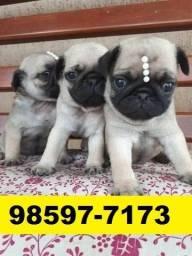 Canil Filhotes Cães Belíssimos BH Pug Bulldog Shihtzu Lhasa Spitz Alemão Maltês Yorkshire