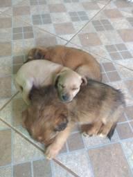 Título do anúncio: Cachorros filhotes para adoção