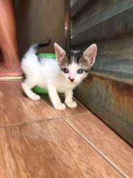 Título do anúncio: Doação lindos gatinhos