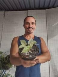 Venda de mudas de plantas