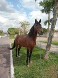 Cavalo macha picada