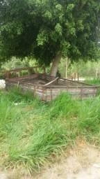 Carroceria de madeira 5 metros