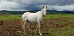 Vendo ou troco cavalo.
