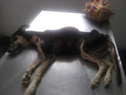 Cachorrinha precisando de cuidados e carinho sem raça definida