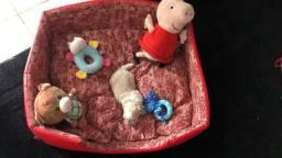 Filhote de shitzu disponível para venda