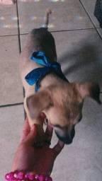 Cachorro com 2 meses