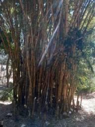 Doa-se bambu
