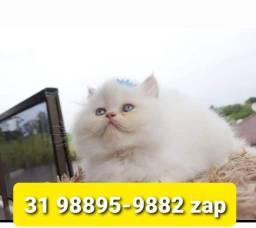 Título do anúncio: Gatil em BH Lindos Filhotes de Gatos Persa Siamês ou Angora