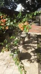 Temos váriedades plantas