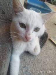 Adoção gata fêmea