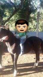Cavalo encilhado