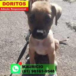 Doritos (cachorro filhote) Doação Responsável - Entrego Brasilia e Entorno