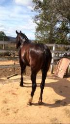 Título do anúncio: Cavalo MM marcha picada