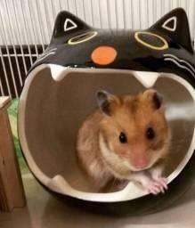 Hamster sirio