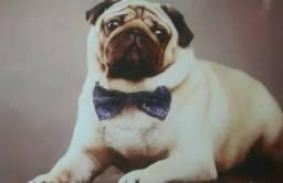 Cachorro , Juarez Antunes tá procurando uma namorada