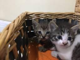 Doação de Gatinhos Com Brindes