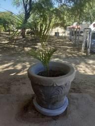 VENDE SE VASOS DE PLANTAS